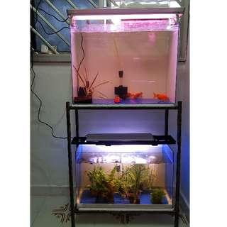 Fish Tank Set Up $120
