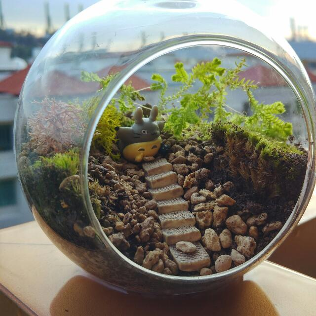 Into The Woods Ft Totoro Glass Ball Terrarium Design Craft On