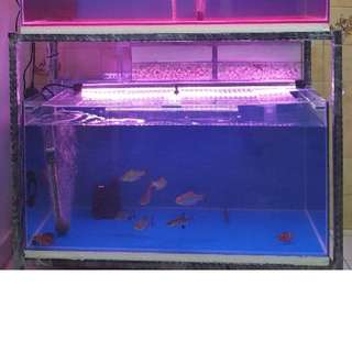 fish tank and wrought iron stand
