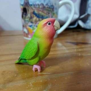 桃面鸚鵡 杯緣子