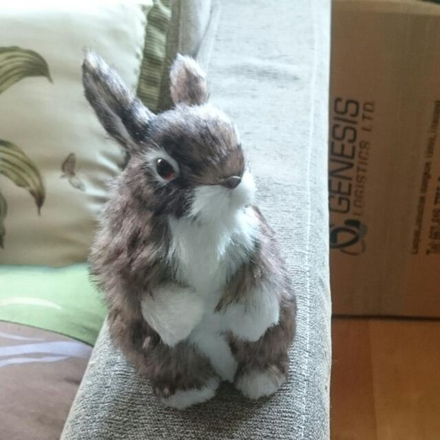 毛茸兔🐰玩偶/擺飾