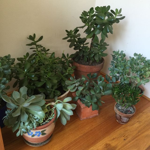 Various Plants And Succulents