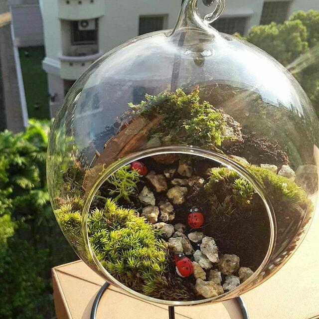 Dewing It Right Ft Tiny Ladybugs Glass Ball Terrarium Design