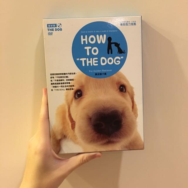 狗狗寵物黃金獵犬