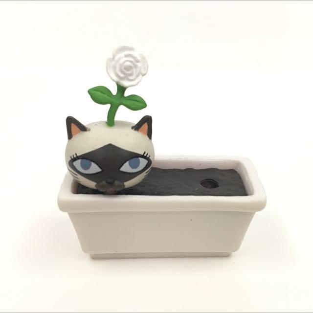 扭蛋 盆栽貓
