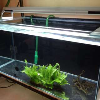 3ft Fish Tank, Stand And Light For Sale