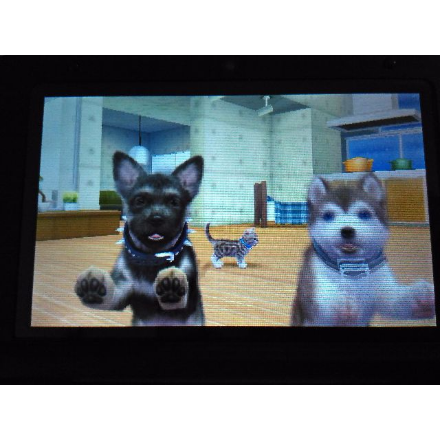 Nintendogs Cats French Bulldog New Friends Toys Games On Carousell