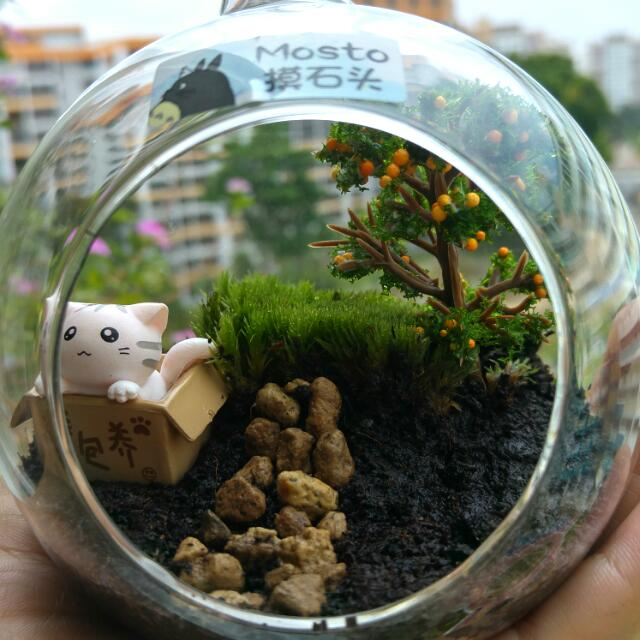 Under The Orange Tree Mini Glass Ball Terrarium Design Craft On