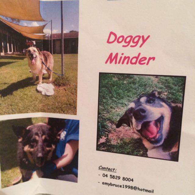 Services, Dog Minding, Animal, Care, Walking