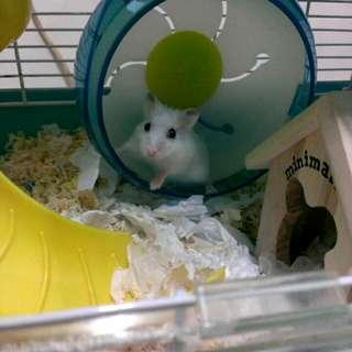 老鼠倉鼠零食