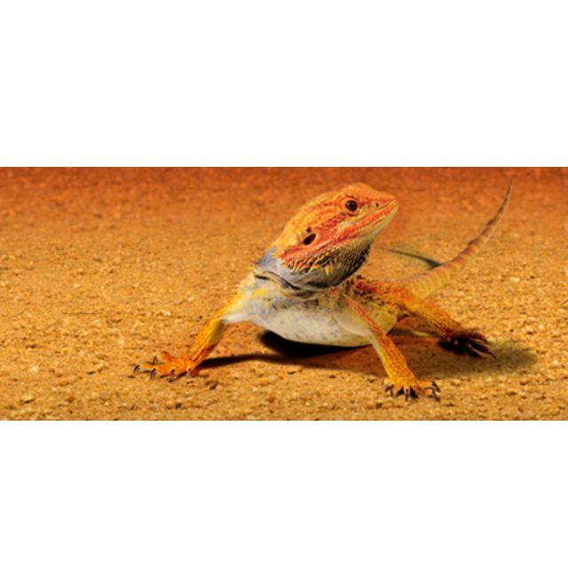 Sand Mat Desert Terrarium Substrate Pet Supplies On Carousell