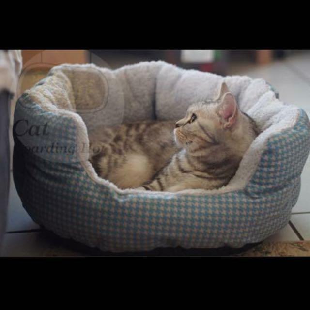 貓咪、小型犬用包覆踏踏床