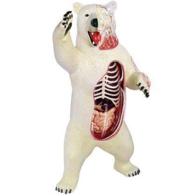 TEDCO 4D 北極熊標本玩具