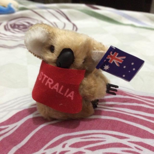 Australia 樹熊