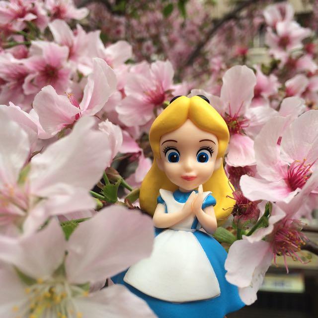 (分享)賞櫻的Alice