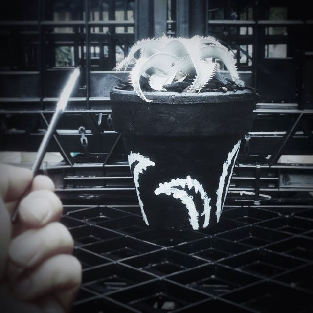 Rare Succulent In Hand Paint Pot