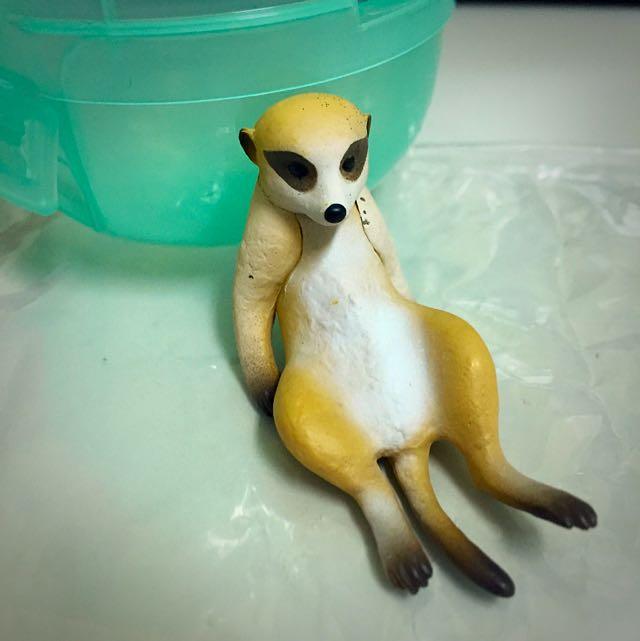 休憩時間 扭蛋 狐獴