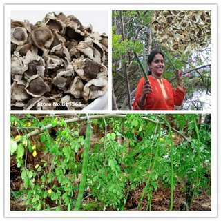 Moringa seed from india