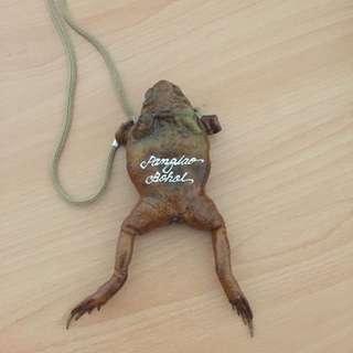青蛙零錢包