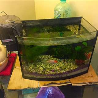 玻璃養魚缸