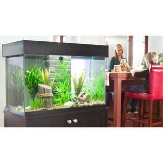 fluval accent aquarium and cabinet combo