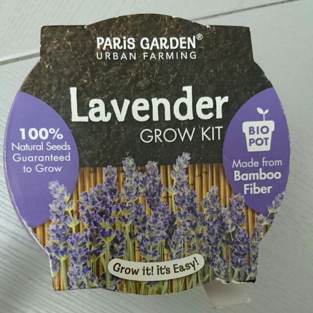 Lavender Easy Grow Kit.