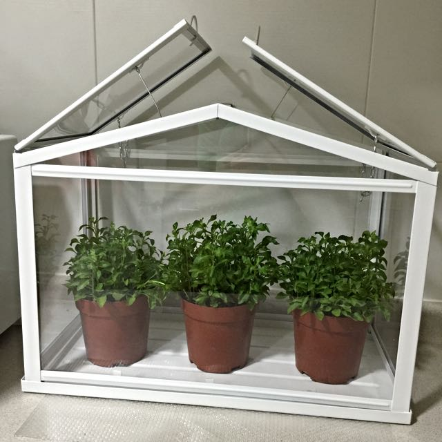 Ikea Greenhouse Terrarium For Plants Gardening On Carousell