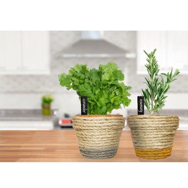 Sisal Rope Wrapped Terra Cotta Pots