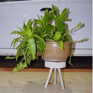 Cute Modern Concrete Vase/Pot Stand