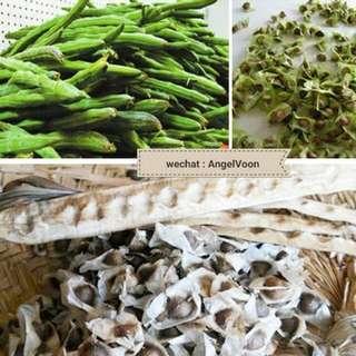 100 gram moringa seeds (shipped)