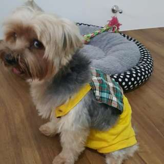 Yellow Checkered Jumper For Dog