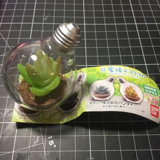 多肉植物 燈泡 扭蛋