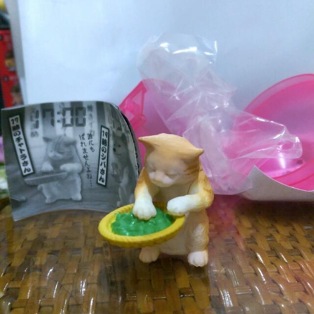 貓咪 挑豆 扭蛋 下班後的時光