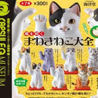 誠徵 徵收 誠收 海洋堂 招財貓 扭蛋 公仔 模型 玩具 招財虎 白色的老虎
