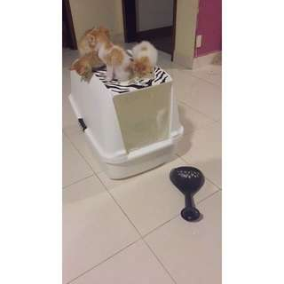 Cat It Litter Box (Booked)