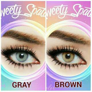 SWETTY SPATAX GRAY AND BROWN
