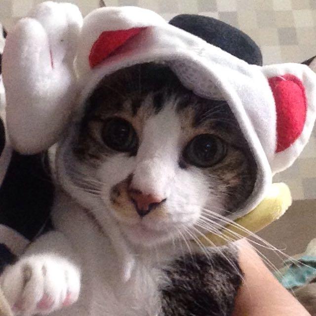 貓咪、狗狗變裝樂~招財貓、聖誕麋鹿頭飾
