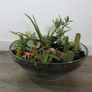Large Terrarium Bowl