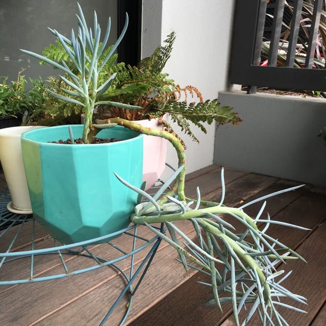 Succulent In Green Clay Pot For Sale