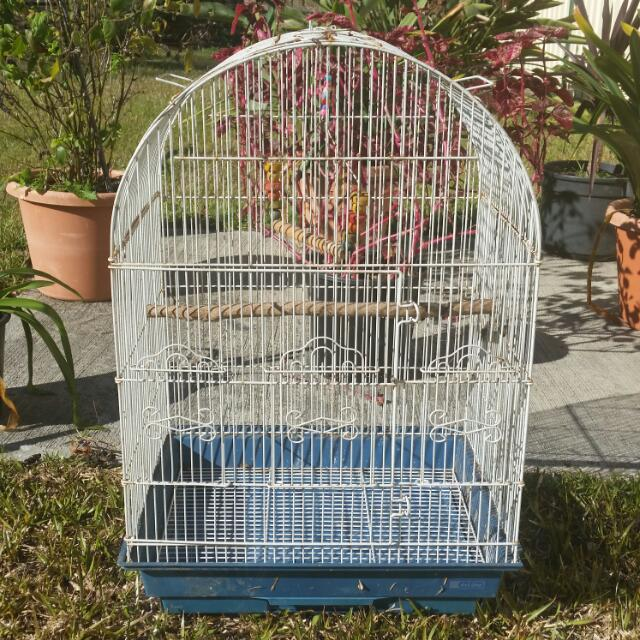 Medium size BIRD CAGE. Good Condition
