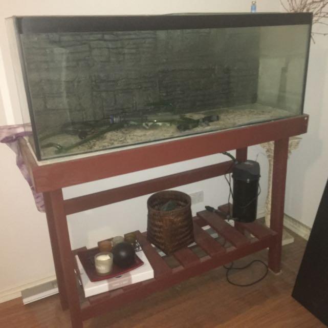 Home Aquarium - Negotiable