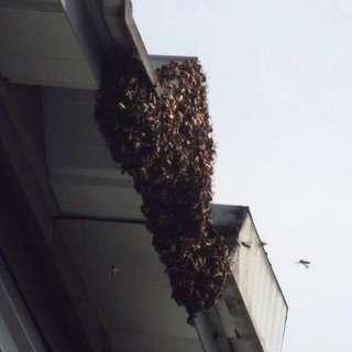 Destroyed All Kind  Pest   Bees Hives  Or Hornet Hives