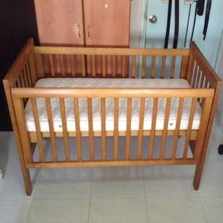 King Parrot Daintree Cot with King Parrot Innerspring Mattress