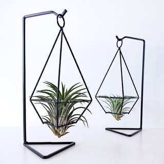 Hanging: Gem With Air Plant
