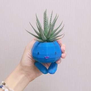 多肉走路草🌿 3D列印盆栽 🎍