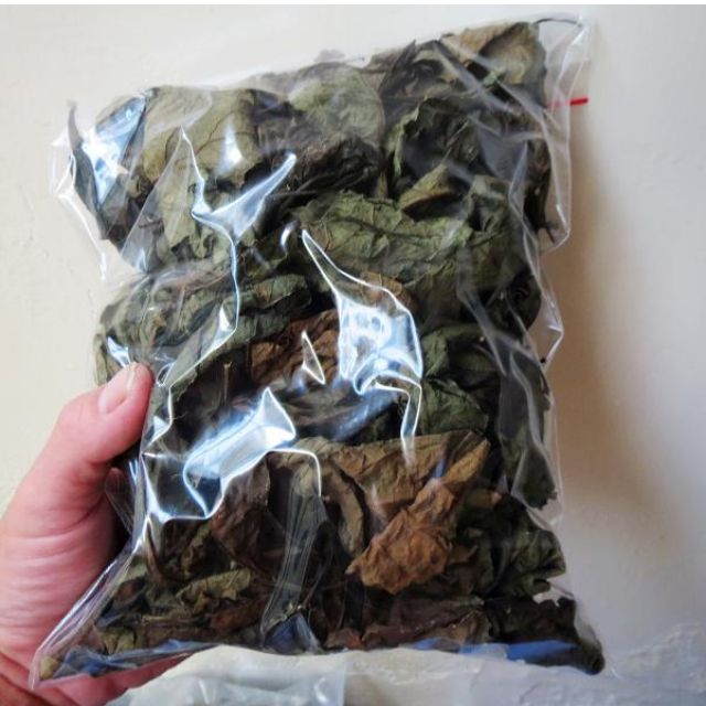 苦丁茶 - 南非葉茶