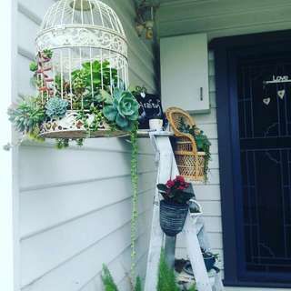 Elegant Bird cage with Succulents for your porch.