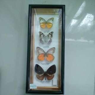 Preserve Butterfly