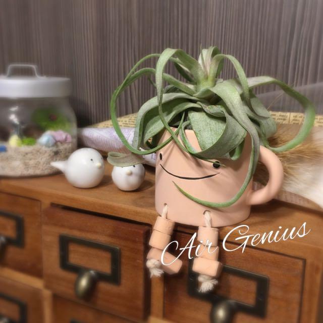 《空氣精靈》空氣鳳梨-馬克杯-電捲燙-療癒小物-多肉植物-仙人掌