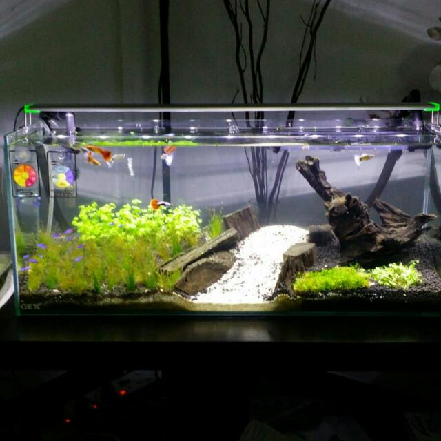 2ft small fish tank complete with all accessories for for How to clean a fish tank without killing the fish